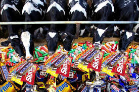 Cows and Candy